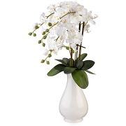 Orchidees orchidées blanches en vase h66cm